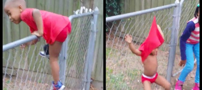Little Boy Tries To Hop The Fence And Totally Fails 3 Separate Times